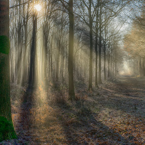 colour the forest by Egon Zitter - Landscapes Forests ( colour, color, beam, forest, mist )