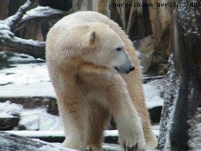 Photo: Knut untersucht neugierig die verschneite Anlage :-)