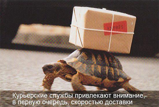 Черепаха экспресс-доставка