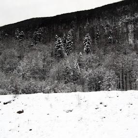 by Kaja Radošević - Landscapes Forests ( pwcbwlandscapes )