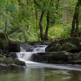 Woodland stream by John Holmes - Landscapes Forests ( stream, green, waterfall, moss, trees, summer, long exposure, woodland, white water, rocks,  )