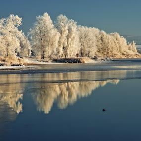 Silvesrovské jitro... by Miloš Stanko - Uncategorized All Uncategorized ( led, stromy, reflections, námraza, rybník, voda )