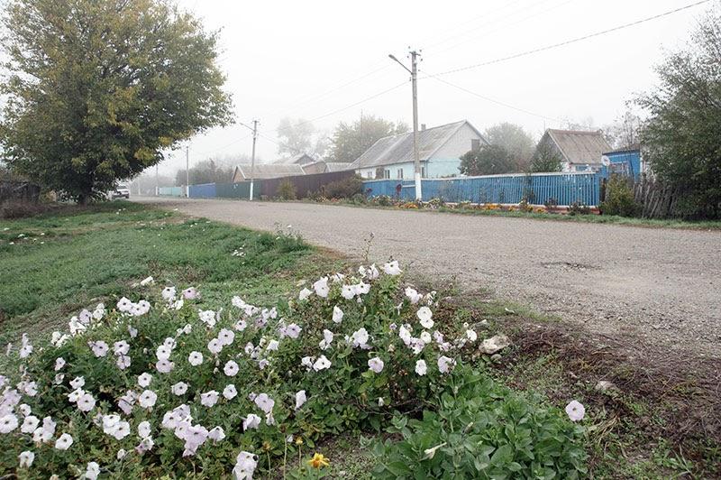 Даже поздней осенью придомовые территории сельчан украшает цветущая петуния