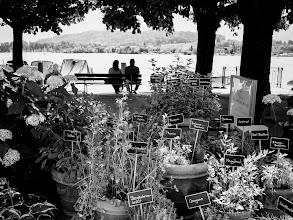 Photo: herbs...  #street #streetphotography #shootthestreet  #blackandwhite #blackandwhitephotography #bw #monochrome
