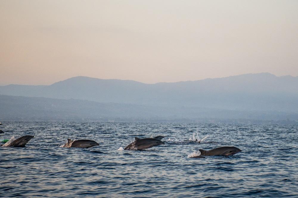 Matahari Terbenam Bali dengan Lumba-lumba di Pantai Lovina