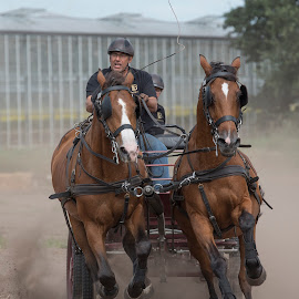horsepower by Egon Zitter - Sports & Fitness Other Sports ( horse, contest, fast, power, speed, horses )