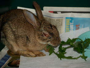 Photo: 11/08/08 (Bunny always maintained a good appetite throughout the illness)