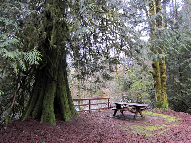 Photo: Picnic table in Rosewell Creek Provincial Park, Mud Bay, BC, Canada.