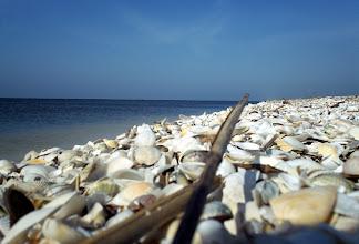 Photo: Csak tenger és kagylók.