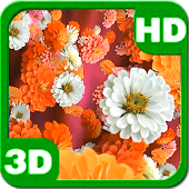 Bloom Zinnias Flowers Drift 3D