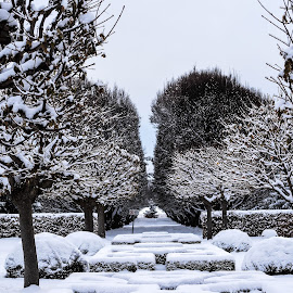 Symmetry by Manasvini Munjal - City,  Street & Park  City Parks ( blue, snow, white, trees, symmetry )