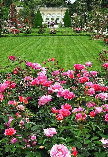 Rose Garden Wallpaper Apps On Google Play