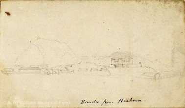 Photo: Pencil sketch of Banda Neira island seen from the harbour of Banda Besar by A. R. Wallace in 18??. Copyright The A. R. Wallace Memorial Fund.