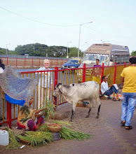 Photo: Only cow we saw in Mumbai