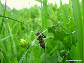 Photo: A bee, like us, hoping for some bloody sunshine!