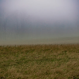 by Vicki Switala Riley - Landscapes Weather ( outdoor, foggy, foggy weather, haze, outdoors, field, outdoor photography, pasture, mist, landscape, fog,  )