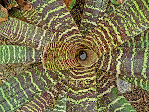 Photo: Geometry in Nature Another beautiful bromeliad, with a circular striated pattern. My contribution to #FloralFriday, curated by +Tamara Pruessner.  (feel free to reshare!)