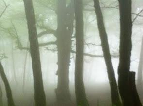 Photo: Nebbia.