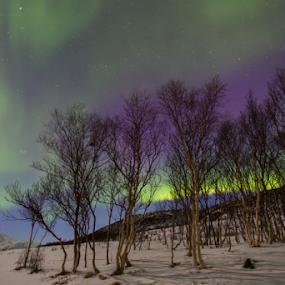 Aurora Dans by Geir Hammer - Uncategorized All Uncategorized ( winter, mountain )