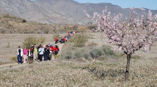 Los almendros en flor, gran reclamo turístico por su belleza paisajística