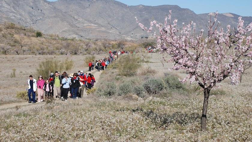 Grupo de participantes en una de las Rutas del Almendro en Flor celebradas en la provincia.