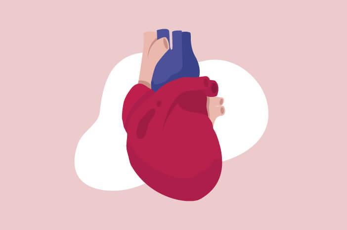 Image result for jantung koroner
