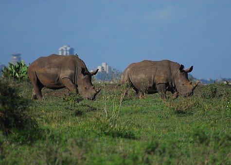 Rhino, Nairobi National Park, Kenya