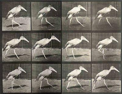 تصاویر حرکات حیوانات
