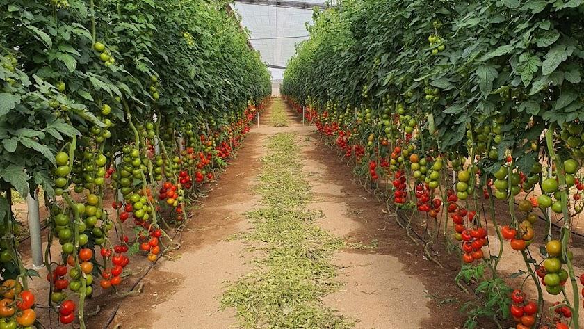 Maximum de Vellsam en todo tipo de cultivos.