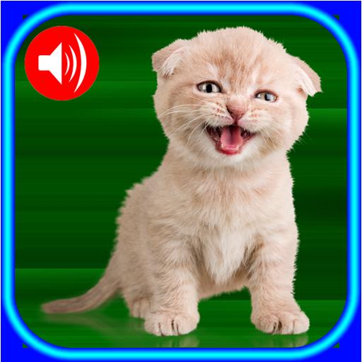Download 65+  Gambar Kucing Persia Kecil Terlihat Keren