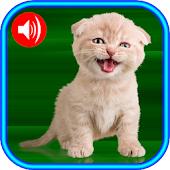 Free Cat Sounds App
