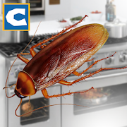 Cockroach Insect Simulator