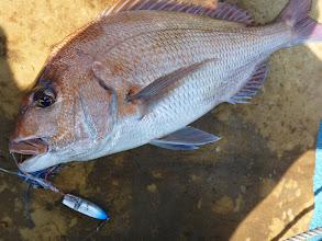 Photo: これは引きました! 船頭さんのインチクの高速巻きにズドン! 真鯛3.5kgかな? 「とったどー!」