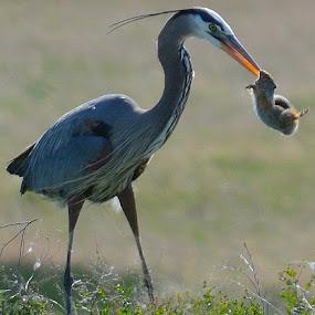 Lunch by Lyn Daniels - Animals Birds (  )