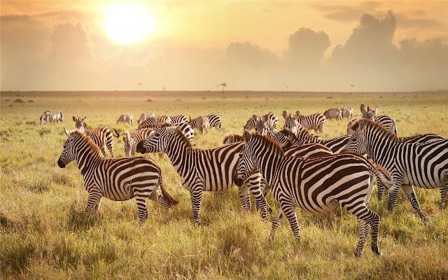 Serengeti National Park Theme & New Tab