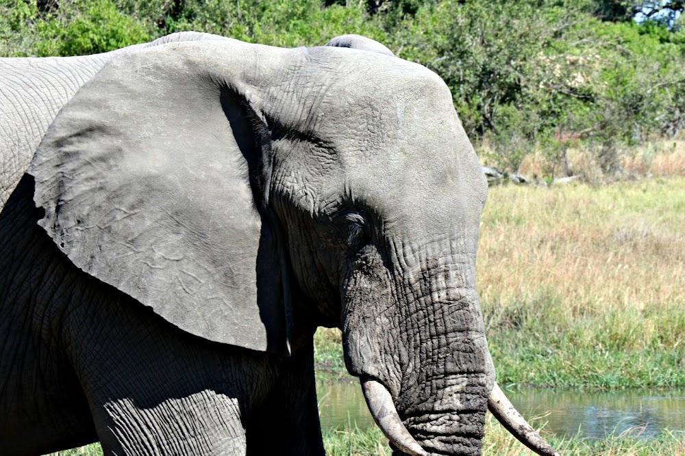 Toxins in water kill over 300 elephants in Botswana