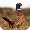 Pheasant Sounds icon