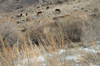 Photo: Kirgizams labai svarbūs yra arkliai.  Kyrgystan people love and appreciate their horses.