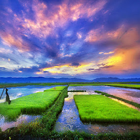 Colourful Paddyfield by Andrew Supit - Landscapes Cloud Formations