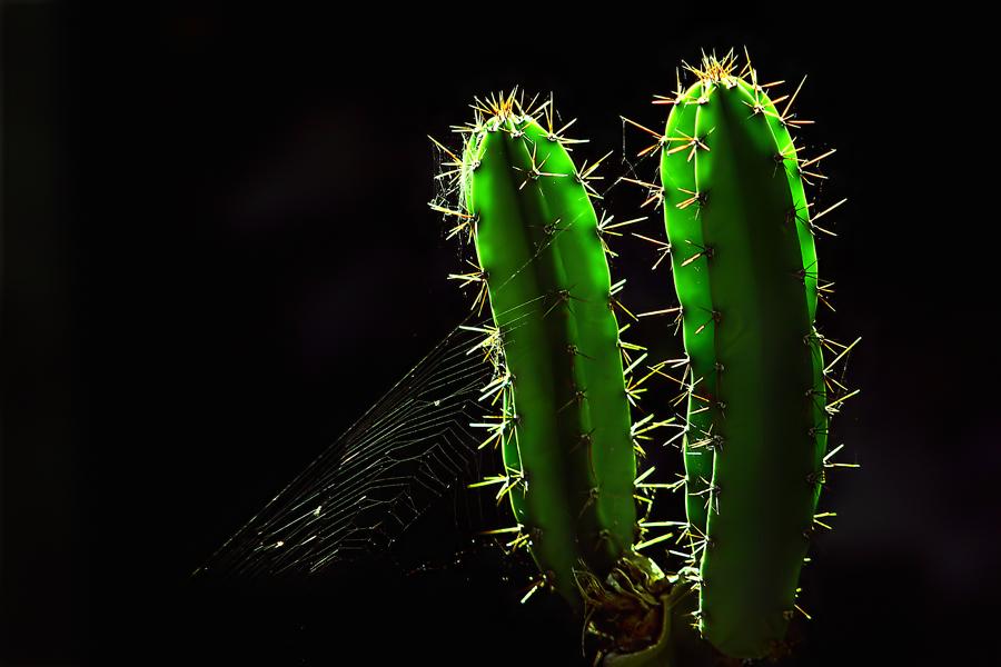 cactus by Domen Dolenc - Nature Up Close Flowers - 2011-2013