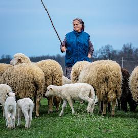 Shepherdess by Nenad Borojevic Foto - People Portraits of Women ( shepherdess, sheep,  )