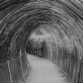 by John Herlo - Black & White Abstract