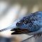 Bird 3 22 07 18.jpg