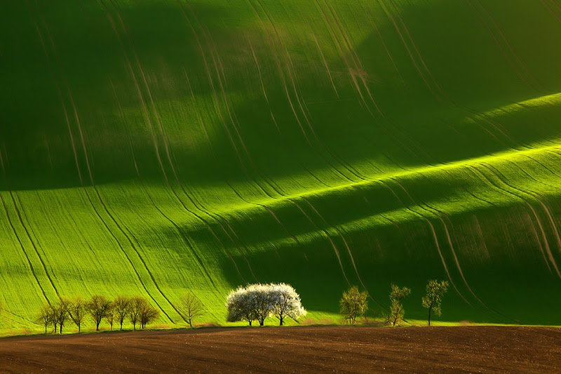 Photo: Красивые снимки полей от фотографов Marek Kiedrowski и Krzysztof Browko.