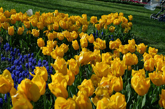 Photo: tulip gardens at Topkappi Palace