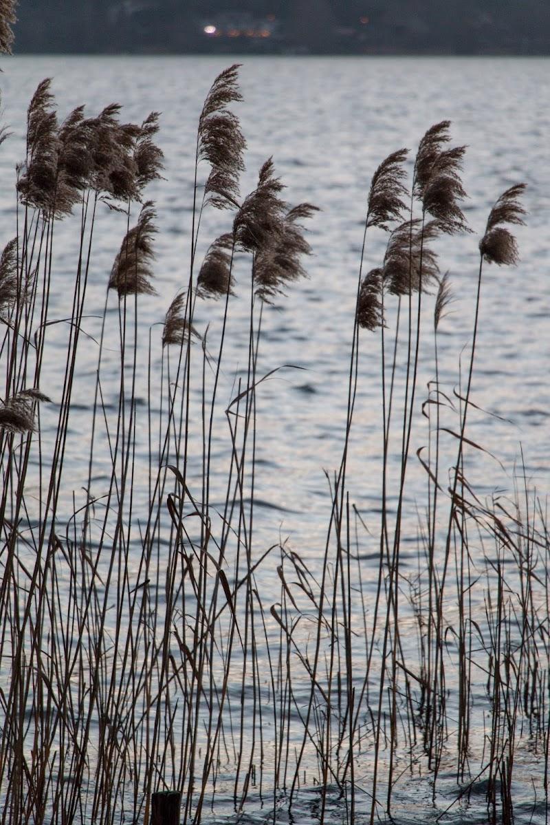 In riva al lago di Jiggly