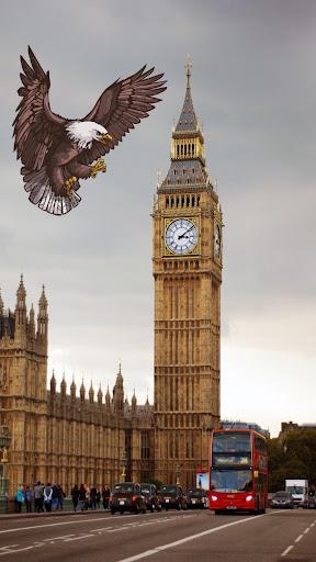与鹰一起探索新世界