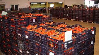 La comercialización de hortalizas ha permitido crear grandes compañías netamente exportadoras.