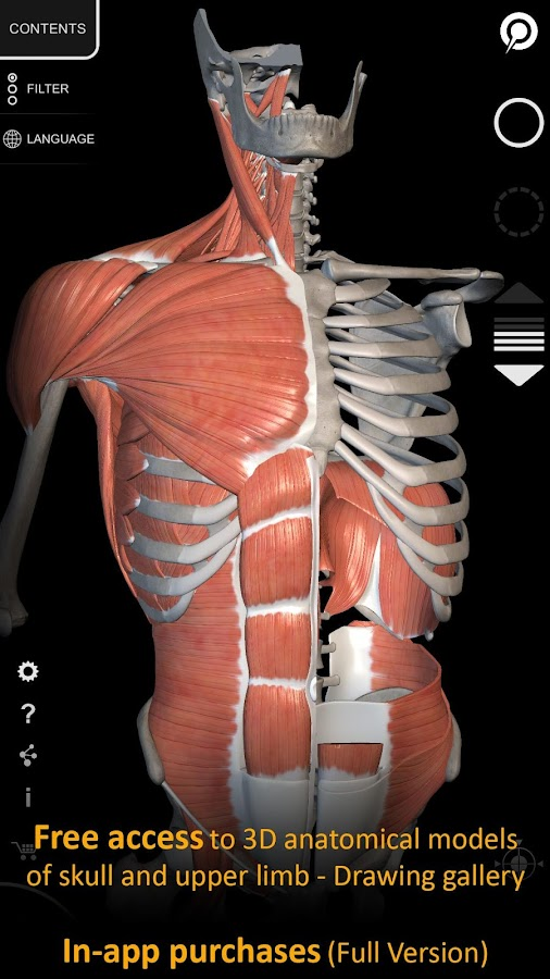 muscle | skeleton - 3d anatomy - android apps on google play, Muscles