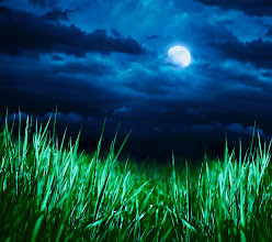 Photo: Meadow at night